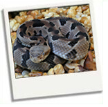snakes-in-the-smoky-mountains-(1)