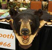 Black bear, oh my!