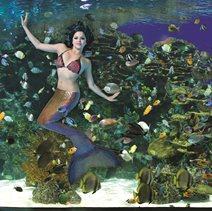 Ripley's Mermaids - Pigeon Forge