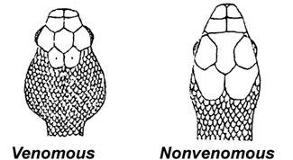 head-shape-snakes.jpg