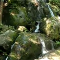 Cliff Branch Falls, also known as The Place of a Thousand Drips